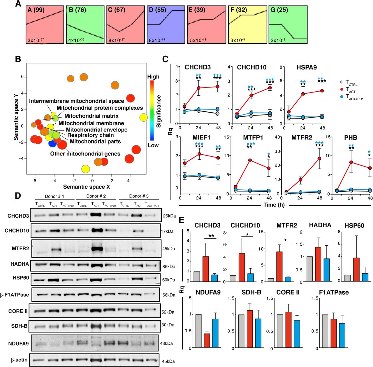 Pd 1 Signaling Affects Cristae Morphology And Leads To